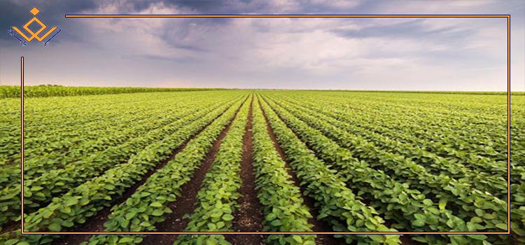 پیشرفت بخش کشاورزی مدیون تلاش محققان برای دستیابی و معرفی یافتههای نوین